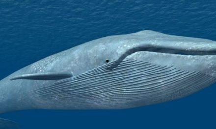 Qué es el Blue whale challenge